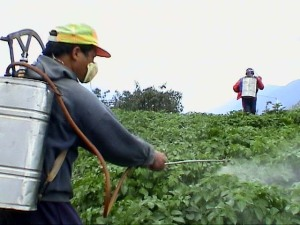 Pesticide Spray. Photograph by Sachin Sharma